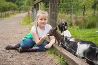 Lancaster Park and Animal Farm young girl with lamb