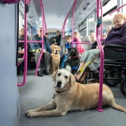 First Bus working with RNIB to help customers hard of sight