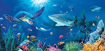 Check out hundreds of different sea creatures at the Weymouth Sealife Centre