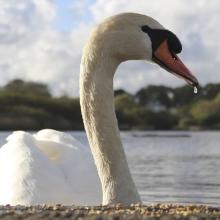 Swanpool Nature Reserve
